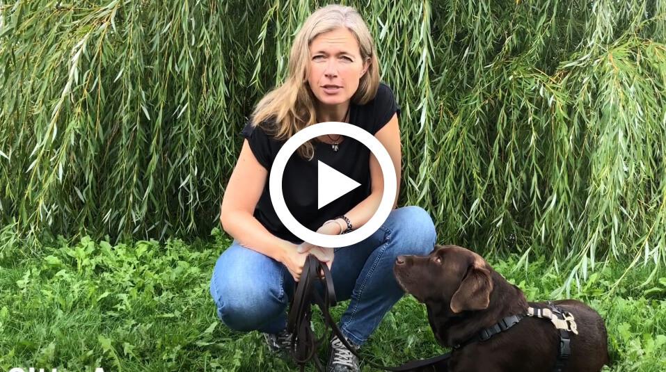 Hundetræning | Trænet og tryg familiehund