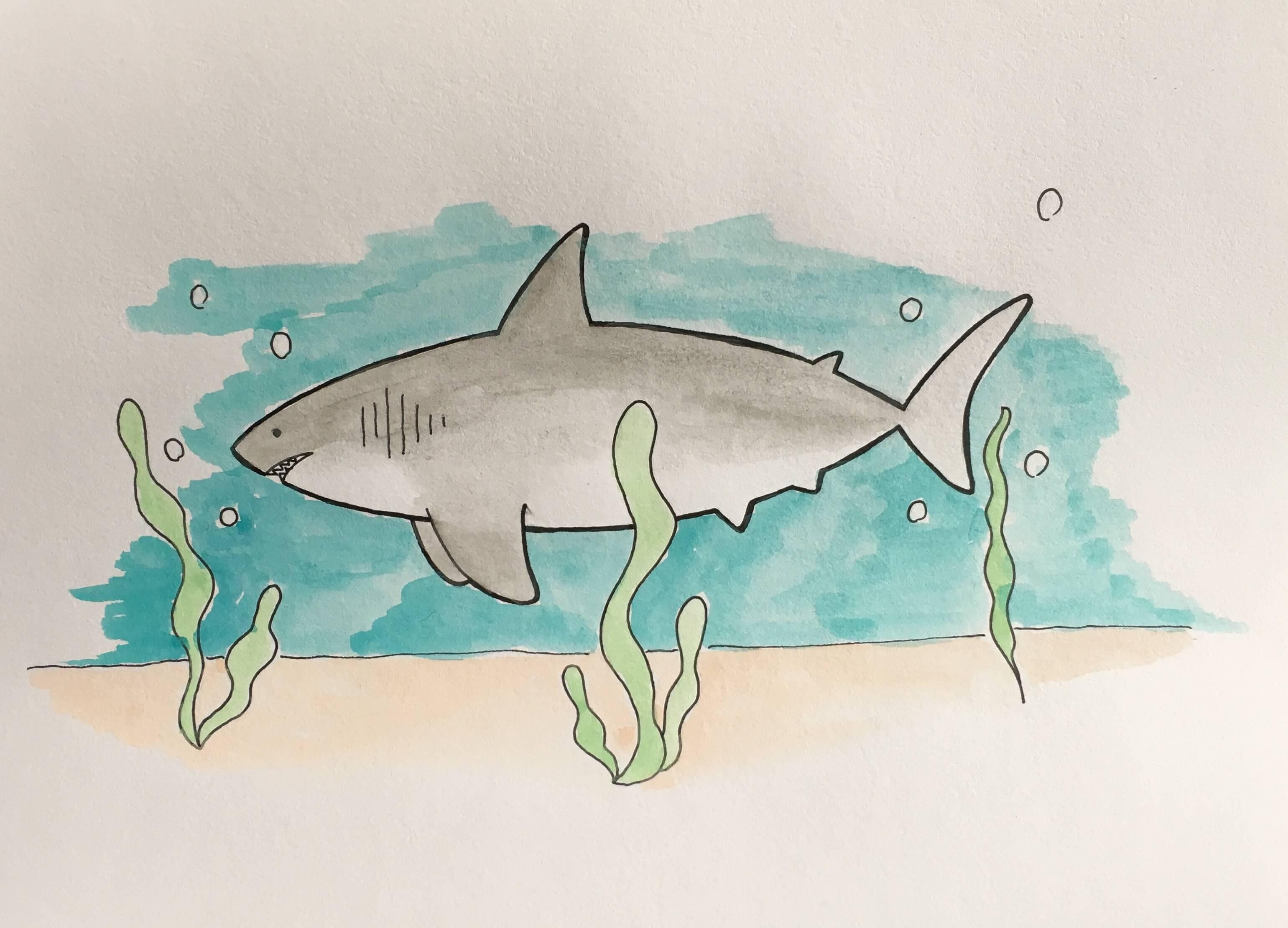 Lær at tegne en haj